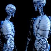 幹細胞 ガン